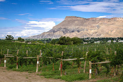 Photograph - Grand Valley Vineyards by Teri Virbickis
