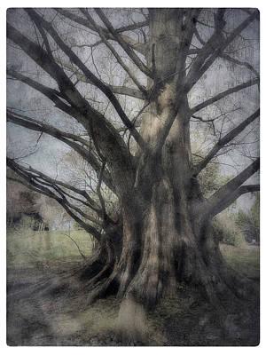 Digital Art - Grandiose by Patrice Zinck