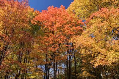 Photograph - Grandma Red's Woods by Peg Runyan