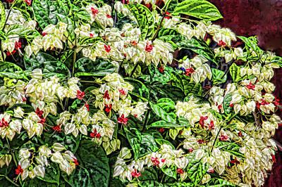 Photograph - Grandmas Garden by HH Photography of Florida