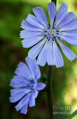 Soul Food Photograph - Grandmother's Chicory by Dale Jackson