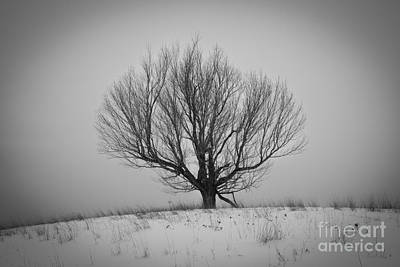 Photograph - Tree On A Hill by Glenn Gordon