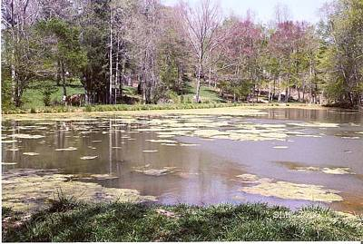 Photograph - Grandpa's Pond by Lee Hartsell
