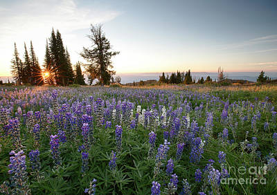 Photograph - Granite Mountains Sunrise by Idaho Scenic Images Linda Lantzy