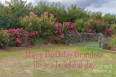 Photograph - Granny's Rose Garden by Elaine Teague