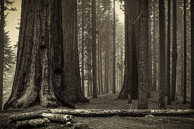 Photograph - Grant's Grove Kings Canyon National Park by Roger Passman