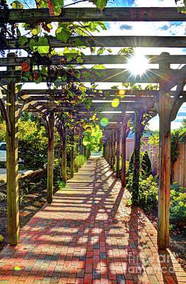 Photograph - Grape Arbor by Savannah Gibbs