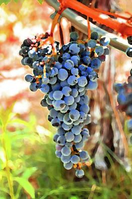 Napa Valley Vineyard Digital Art - Grape Cluster by Norman Coleman III