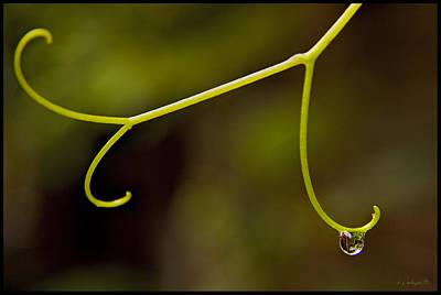 Grape Drop Art Print by Daniel G Walczyk
