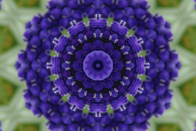 Photograph - Grape Hyacinth Kaleidoscope by Robyn Stacey