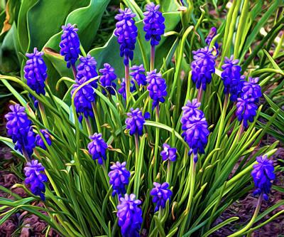 Purple Grapes Digital Art - Grape Hyacinth - Paint by Steve Harrington