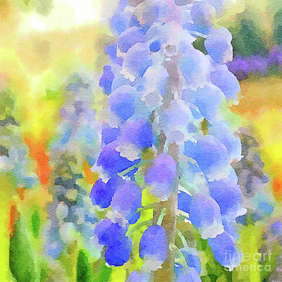 Photograph - Grape Hyacinths 2 by Chris Scroggins