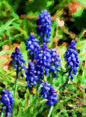 Photograph - Grape Hyacinths  by David Lane