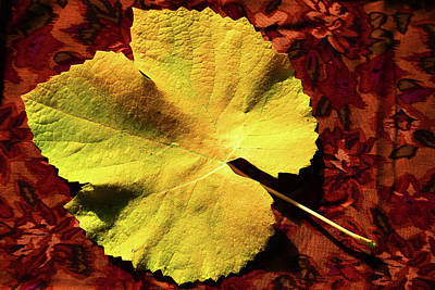 Photograph - Grape Leaf by Nareeta Martin