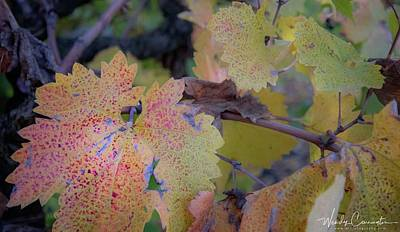 Photograph - Grape Leaf by Wendy Carrington