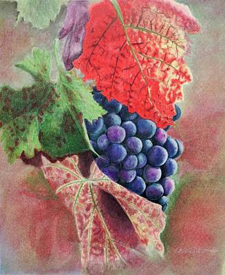 Purple Grapes Drawing - Grape Leaves by Barbara Stanton