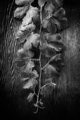 Photograph - Grape Leaves On Wood In Bw by YoPedro