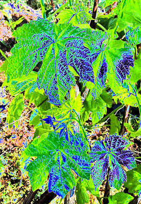 Grape Leaves Art Print
