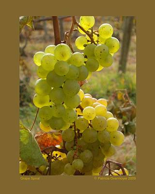 Nys Photograph - Grape Spiral by Patricia Overmoyer