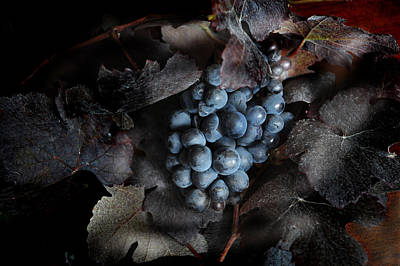 grape vine I Art Print by Jon Daly