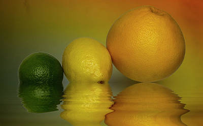Grapefruit Lemon And Lime Citrus Fruit Art Print