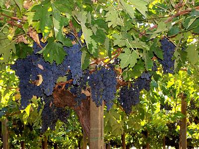 Art Print featuring the photograph Grapes Are Ready by Judy Kirouac