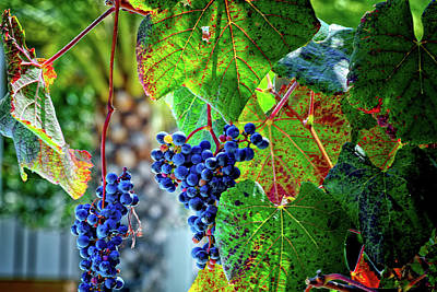 Photograph - Grapes by Camille Lopez