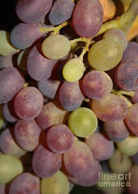 Grapes Art Print by Carol Groenen