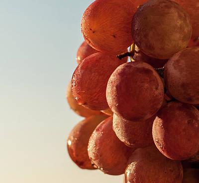 Photograph - Grapes Cluster by Sergey Simanovsky