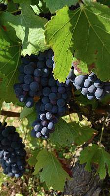 Photograph - Grapes In Light by Cheryl Miller