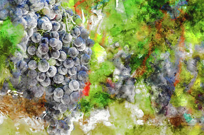 Winery Digital Art - Grapes On The Vine In Napa Valley by Brandon Bourdages