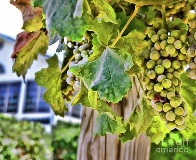 Photograph - Grapes On The Vine by Kerri Farley