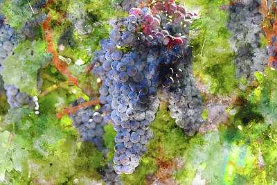 Photograph - Grapes On The Vine That Will Be Made Into Wine by Brandon Bourdages