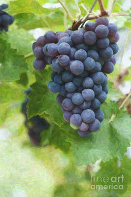 Digital Watercolor Digital Art - Grapes On The Vine by Tim Gainey