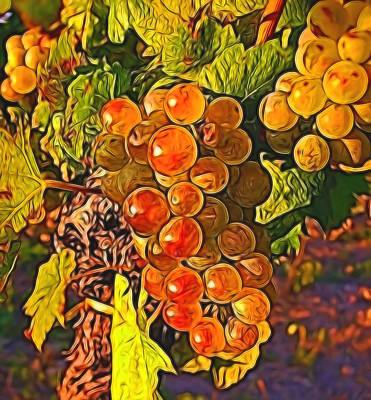 Mixed Media - Grapes by Pamela Walton