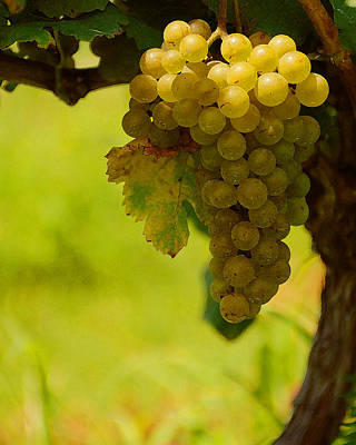 Grapes Art Print by Travis Aston