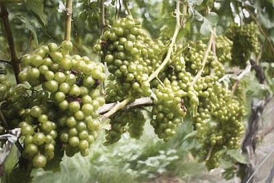 Photograph - Grapes by Zev Steinhardt