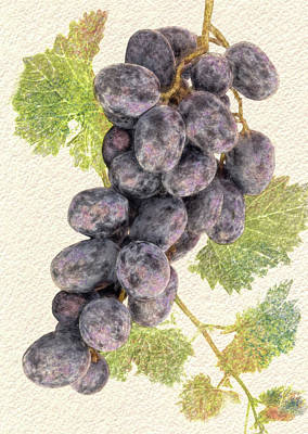 Digital Art - Luscious Grapes by Bill Johnson