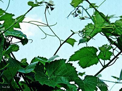 Blue Grapes Photograph - Grapevine 2 by Sarah Loft