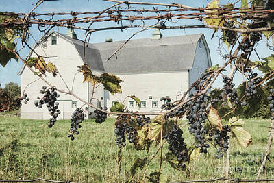 Wine Cellar Photograph - Grapevine by Alison Sherrow I AgedPage