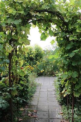 Grape Leaves Photograph - Grapevine Arch In Garden by Carol Groenen
