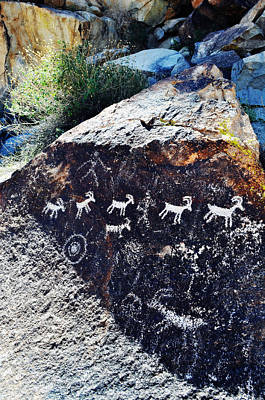 Grapevine Canyon Desert Bighorn Sheep Petroglyphs Art Print