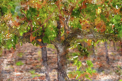 Photograph - Grapevine In Autumn by Brandon Bourdages