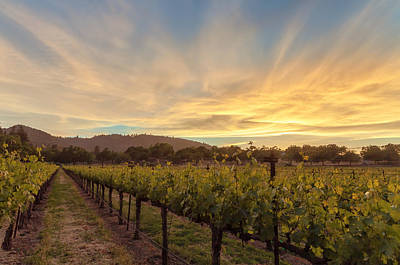 Photograph - Grapevines And The Sunset by Jonathan Nguyen