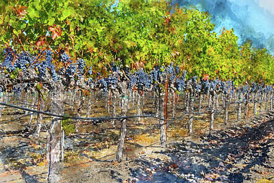 Grapes Photograph - Grapevines In Autumn by Brandon Bourdages