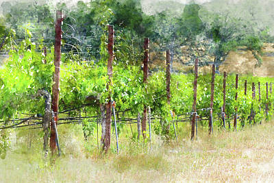 Soil Digital Art - Grapevines In California by Brandon Bourdages