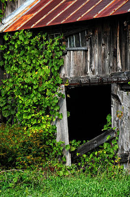 Photograph - Grapevines On An Old Barn by Mike Martin