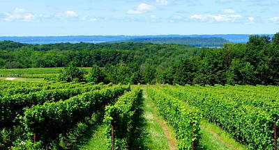 Grapevines On Old Mission Peninsula - Traverse City Michigan Print by Michelle Calkins