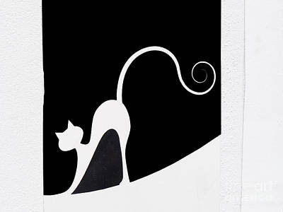 Photograph - Graphic Elegant Spanish Cat by Brenda Kean