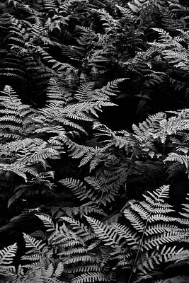 Photograph - Graphic Ferns by Tim Good